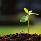 seme che cresce